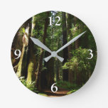 Redwoods and Ferns at Redwood National Park Round Clock