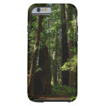Redwoods and Ferns at Redwood National Park Tough iPhone 6 Case