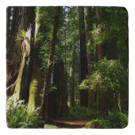 Redwoods and Ferns at Redwood National Park Trivet