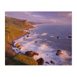 Redwoods coastline, California Acrylic Print