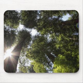 Redwoods, Humboldt Redwoods State Park Mousepad