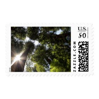 Redwoods, Humboldt Redwoods State Park Postage