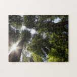 Redwoods, Humboldt Redwoods State Park Puzzle