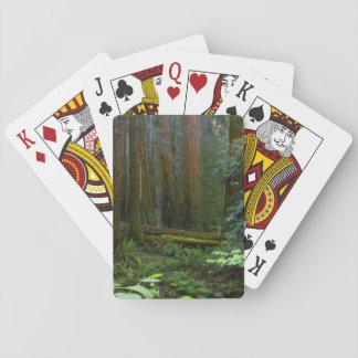 Redwoods In Muir Woods National Park Card Decks