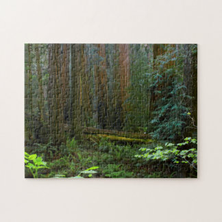 Redwoods In Muir Woods National Park Puzzle