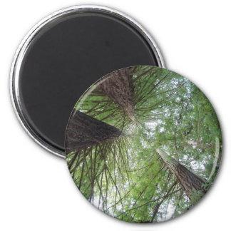 Redwoods Magnet