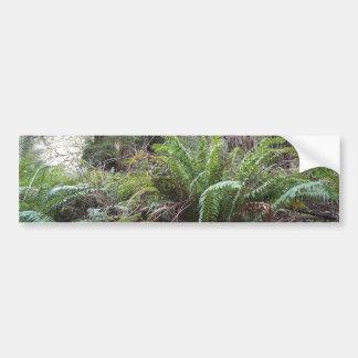 Redwoods National Forest Sword Ferns Bumper Sticker