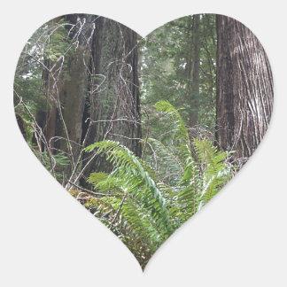 Redwoods National Forest Sword Ferns Heart Sticker