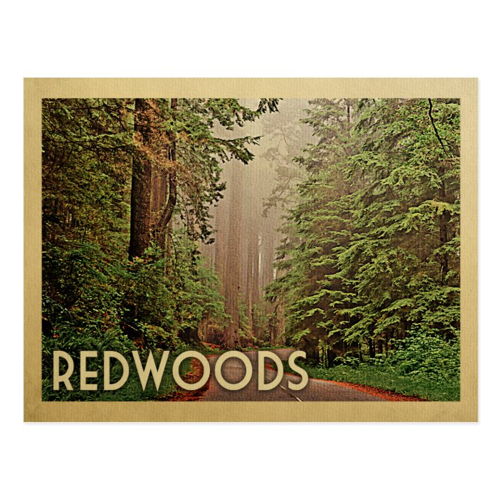 Vintage California Redwoods Postcard