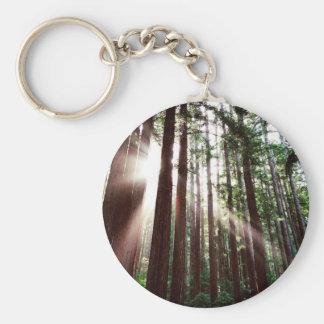 Redwoods National Park Keychain
