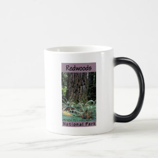 Redwoods National Park Magic Mug