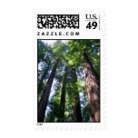 Redwoods Postage Stamps
