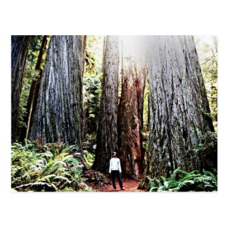 Redwoods Postcard