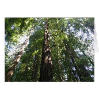 Redwoods Reaching for the Sky Cards