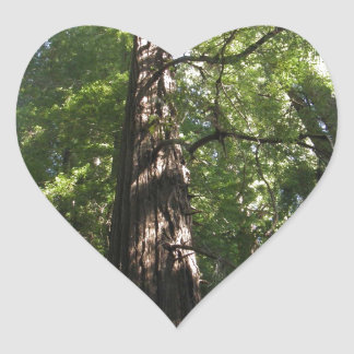 Redwoods Reaching for the Sky Heart Sticker
