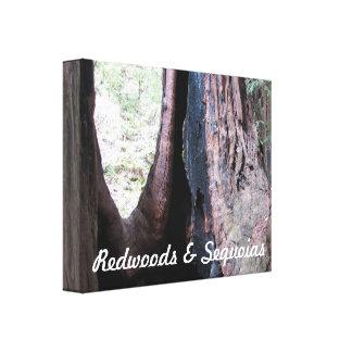 Redwoods & Sequoias Canvas Print