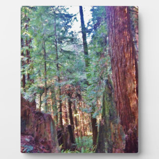 Redwoods Series #2: Through the Trees Plaque
