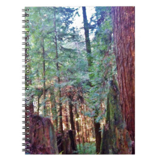 Redwoods Series #2: Through the Trees Spiral Notebook