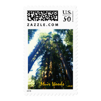 Redwoods Touching Heaven Postage