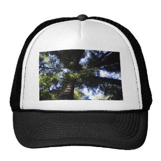 Redwoods Trucker Hat