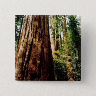Redwoods- Yosemite Button