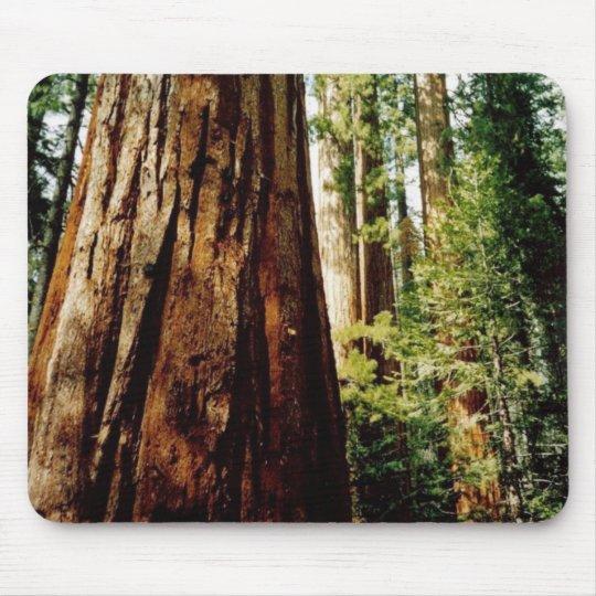 Redwoods- Yosemite Mouse Pad