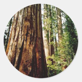 Redwoods- Yosemite Classic Round Sticker