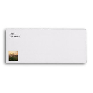 Reed At Sunset Envelope