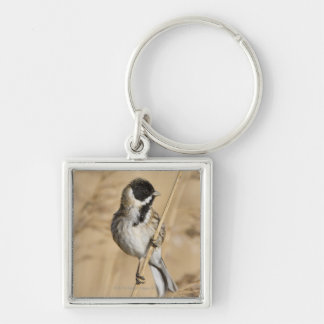 Reed Bunting (Emberiza schoeniclus) perched in Keychain