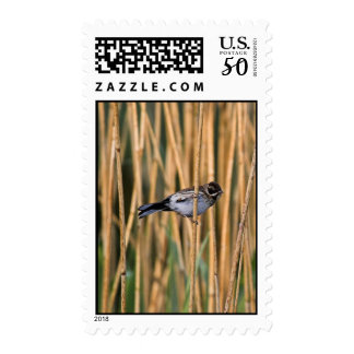 Reed Bunting Postage