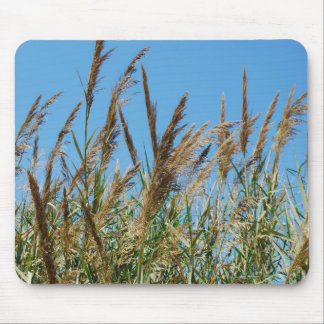 Reed grass on a lake mouse pad