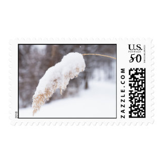 reed in snow postage