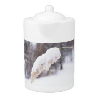 reed in snow teapot