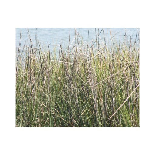Reeds grass and water gallery wrapped canvas