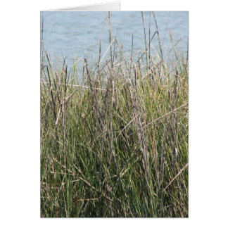 Reeds grass and water greeting card