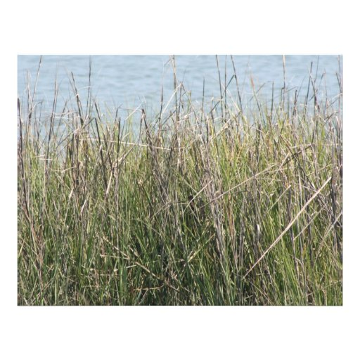 Reeds grass and water letterhead