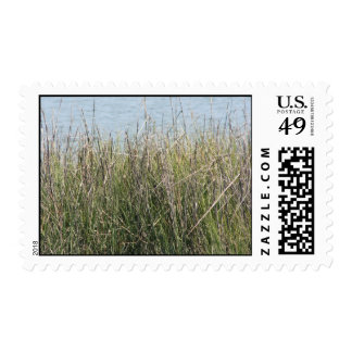 Reeds grass and water postage