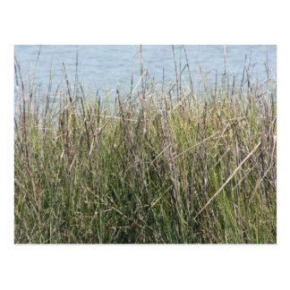 Reeds grass and water postcard