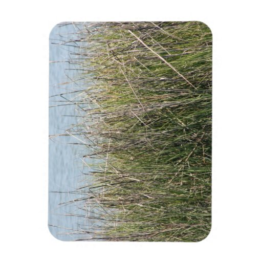 Reeds grass and water rectangle magnets