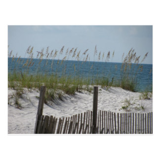 Reeds on the Beach Postcard