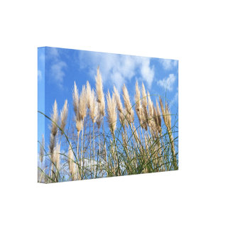 Reeds Sky Stretched Canvas Prints
