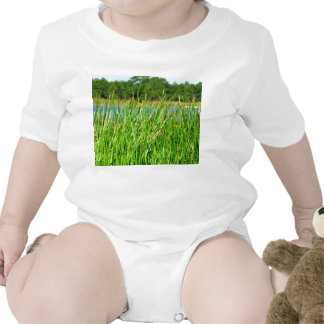 Reeds trees pond background baby creeper