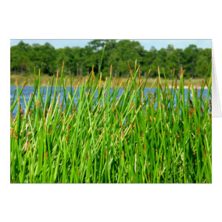 Reeds trees pond background cards