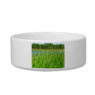 Reeds trees pond background cat water bowl