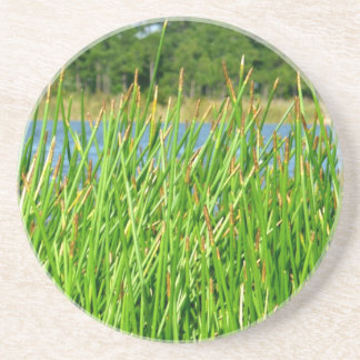 Reeds trees pond background coasters