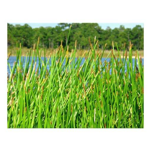 Reeds trees pond background full color flyer