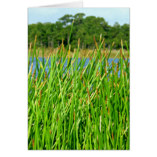Reeds trees pond background greeting card