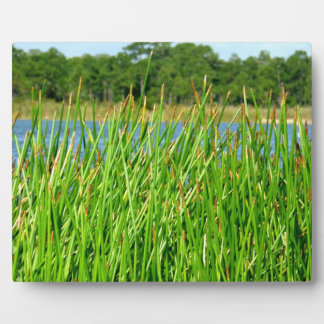Reeds trees pond background photo plaque