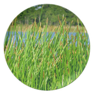 Reeds trees pond background plate