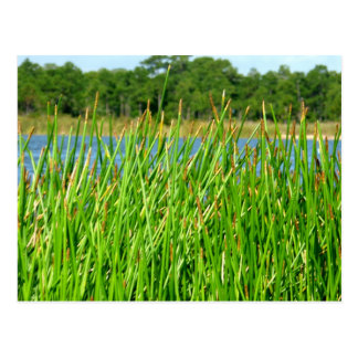 Reeds trees pond background post card